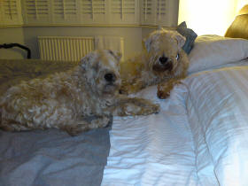 CoCo & Qorey on the bed Jan 09